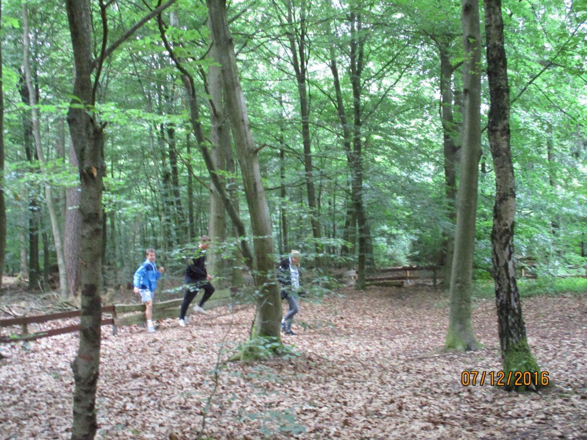 Erkundung des Waldes